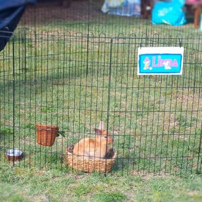 0Giornata-mondiale-coniglio