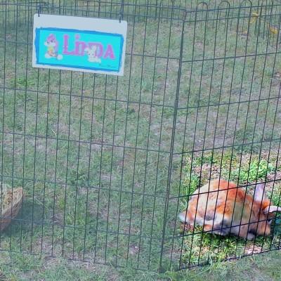 1Giornata-mondiale-coniglio