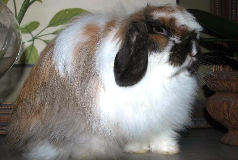 American-Fuzzy Lop
