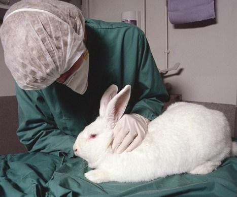 Coniglio-veterinario-300