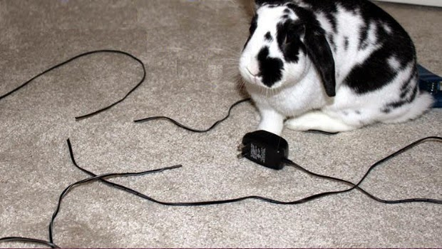 Rabbit-chewing-wires