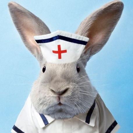 bunny_nurse