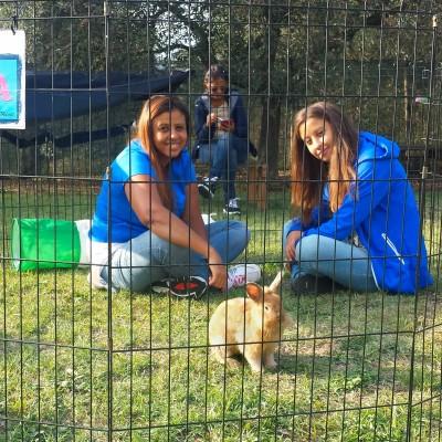 6Giornata-mondiale-coniglio