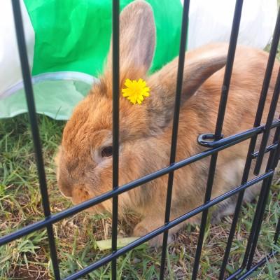 7Giornata-mondiale-coniglio