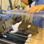 Anestesia e analgesia del coniglio