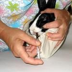 Immobilizzazione sicura di un coniglio in un asciugamano