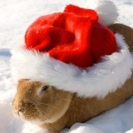 Un Natale sicuro per inostri coniglietti