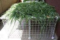 erba stesa su di una grata