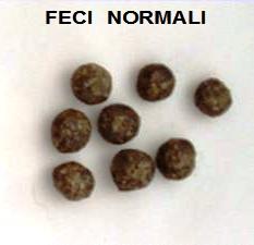 fecinormali