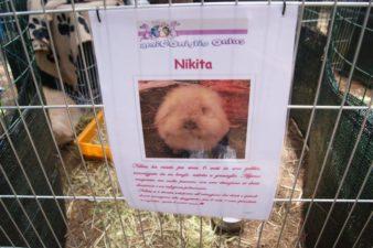 nikita01