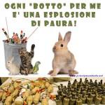 PANICO : ARRIVANO I BOTTI DI CAPODANNO!!!